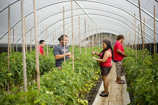 Wow Tomato Farm