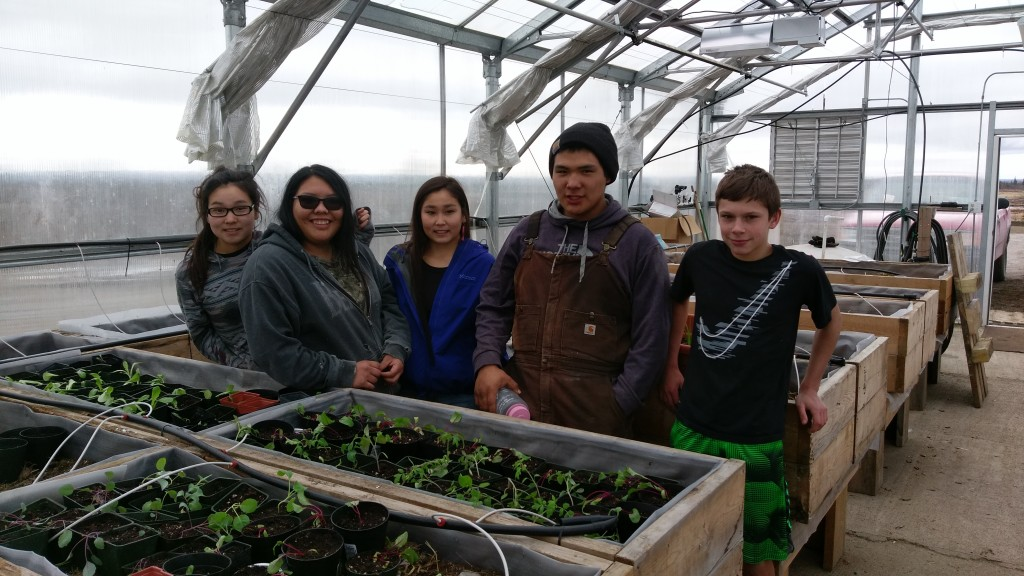 Igiugig High School students plant seedlings, which will grow into food for sale.