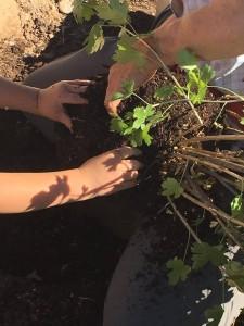 garden-handsearth