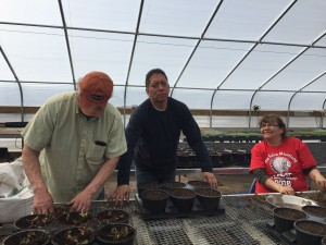 Gitagaanike (RLLFI) crew (left to right) Darwin Sumner, Eugene Standing Cloud and Cherilyn Spears help transplant strawberries at the Wozupi Tribal Gardens greenhouse.
