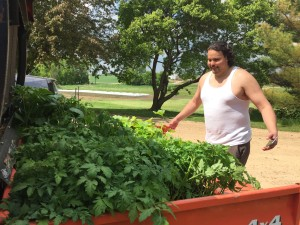 Sam Strong, Director of the Red Lake Economic Development and Planning Department, loads a truck of plants from the Wozupi Tribal Gardens to take back to the Red Lake Nation to plant in Nitaawigitoon Gitigaan (community garden).