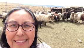 TahNibaa Naataanii of the Navajo Nation and her sheep in Table Mesa, New Mexico