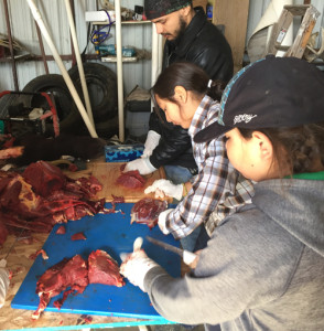 Boys with Braids Rosebud members cut up buffalo meat from their first buffalo harvest