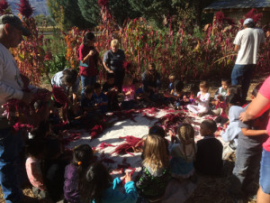 Bishop Indian Head Start youth processing amaranth at the Food Sovereignty Program's garden near the Owens Valley Paiute Shoshone Cultural Center.