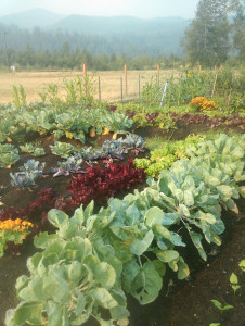 The Nooksack Indian Tribe's community garden produced 2,803 pounds of food.