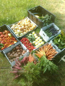 Harvest boxes were donated to the local food bank and senior center.