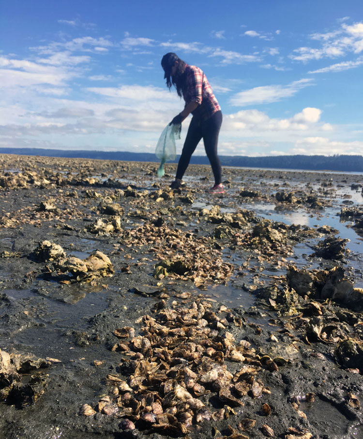 Port Gamble S'Klallam biologist Julianna Sullivan evaluates shellfish growth along the protected beaches.